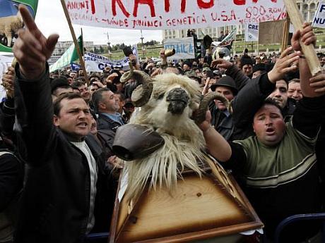 protest fermieri Bucuresti