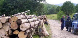 furt lemne padure
