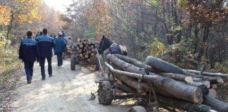 lemne furate politisti