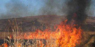 incendiu vegetatie neamt