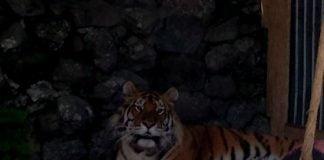 noaptea la Zoo Bucov