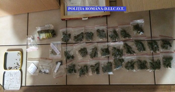 traficanti cannabis